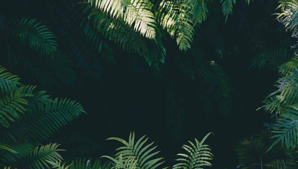 grüne Palmblätter im Dschungel