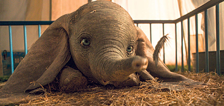 Dumbo liegt im Stroh
